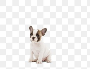 French Bulldog - French Bulldog Toy Bulldog Puppy Dog Breed PNG