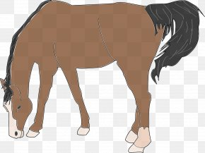 Brown Horse - Website Free Content Clip Art PNG