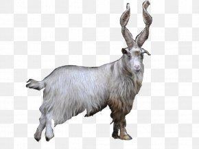 Goat - Feral Goat Farma Park Mountain Goat Fur PNG