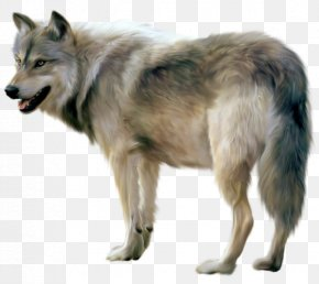 Painted Wolf Clipart - Gray Wolf Clip Art PNG