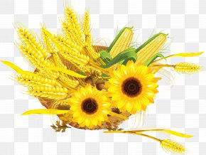 Wheat - Common Sunflower Maize Cereal Wheat Press Cake PNG