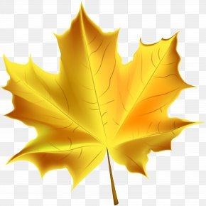 Beautiful Yellow Autumn Leaf Transparent Clip Art Image - Autumn Leaf Color Clip Art PNG