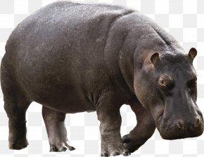 Hippo - Hippopotamus River Horse PNG