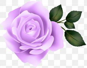 Purple Rose Clip Art Image - Rose Yellow Clip Art PNG