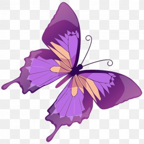 Transparent Purple Butterfly Picture - Butterfly Euclidean Vector Stock Illustration Graphics PNG