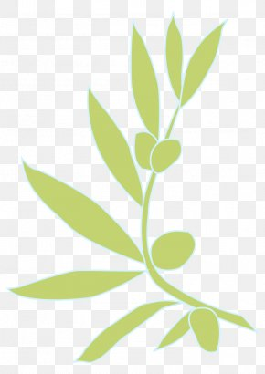 Flowering Plant Plant Stem - Leaf Plant Flower Tree Branch PNG