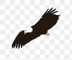 Soaring Eagle Image - Eagle Flight Bald Eagle Clip Art PNG