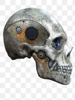 Skull Image - Skull Vertebrate Bone Brain Skeleton PNG