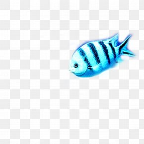 Fish - Turquoise Fish Pattern PNG