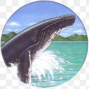 Humpback Whale - Wholphin Common Bottlenose Dolphin Killer Whale Gray Whale Water PNG