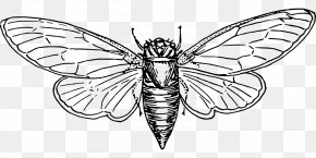 Insect - Colouring Pages Coloring Book Cicadoidea Australian Cicadas Illustration PNG