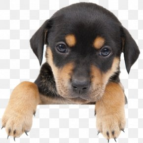 Cute Dog - Labrador Retriever Havanese Dog Puppy Mill Kitten PNG