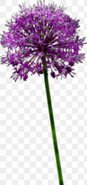 Plant Stem Milk Thistle Cut Flowers Purple PNG