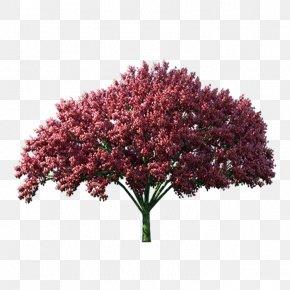 Purple Leaf Tree - Tree Autumn Computer File PNG