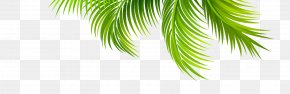 Coconut Leaves - Arecaceae Leaf Coconut Branch PNG