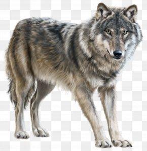 Wolf - Mongolian Wolf Eurasian Wolf Clip Art PNG