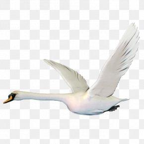 Wildlife Goose - Painting Cartoon PNG