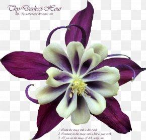 Purple Flower - Purple Flower Violet PNG