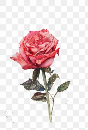 Rose - Rosa Chinensis Beach Rose Flower Adenium Obesum PNG