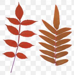 Leaf - Clip Art Leaf Image Computer File PNG