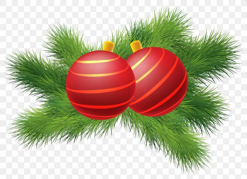 Christmas Tree Leaf Poinsettia Christmas Decoration, PNG, 2500x1816px, Christmas, Branch, Christmas Decoration, Christmas Lights, Christmas Ornament Download Free