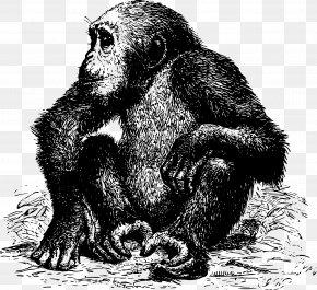 Gorilla Vector - Africa Ape Chimpanzee Pixabay PNG