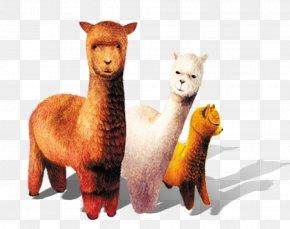 Cartoon Sheep - Alpaca Grass Mud Horse Sheep Llama Stuffed Toy PNG