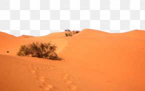 Desert Plants - Sahara Erg Desert Plants Singing Sand PNG