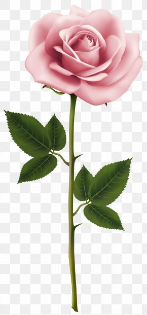 Pink Rose Clip Art Image - Rose Pink Flower Clip Art PNG