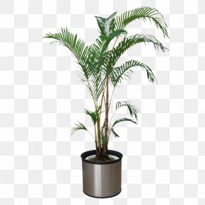 Indoor Plants - Houseplant Bonsai Flowerpot PNG