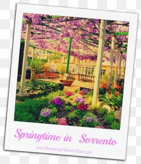 Design - Floral Design Shrub Lavender Flowering Plant PNG