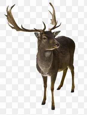 Africa Elk - Reindeer Santa Claus Rudolph Mrs. Claus PNG