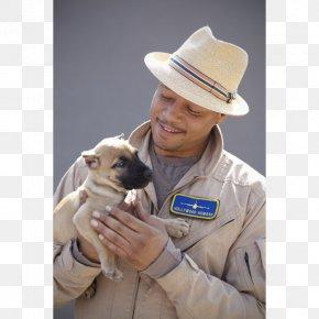 Puppy - Presa Canario Puppy Canary Islands Breeder Dog Breed PNG