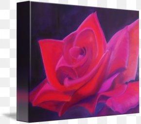Rose Leslie - Garden Roses Rosaceae Purple Still Life Photography PNG