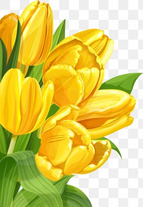 Yellow Background - Tulip Yellow Flower PNG