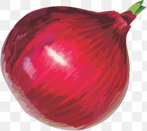 Red Onion Image - Red Onion Afghan Cuisine Clip Art PNG