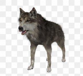 Saarloos Wolfdog Coyote Alaskan Tundra Wolf Clip Art PNG