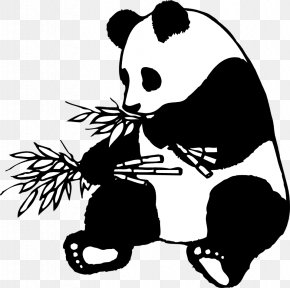 Panda Eating Cliparts - Giant Panda Bear Red Panda Cuteness Clip Art PNG