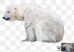 Polar Bear File - Polar Bear PNG