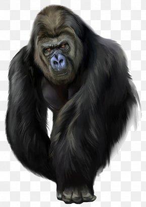Common Chimpanzee Fur - Snout Western Lowland Gorilla Fur Common Chimpanzee PNG