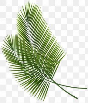 Tropical - Leaf Arecaceae Palm Branch Clip Art PNG