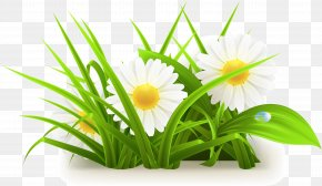 Flowers Grass Vector Grass Vector - Common Daisy PNG