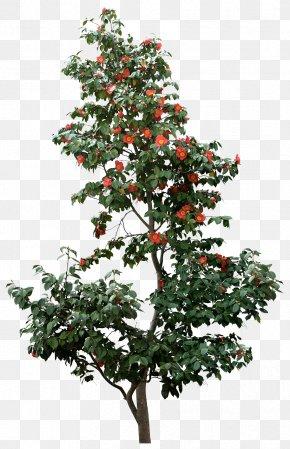 Tree - Tree Pine Branch PNG
