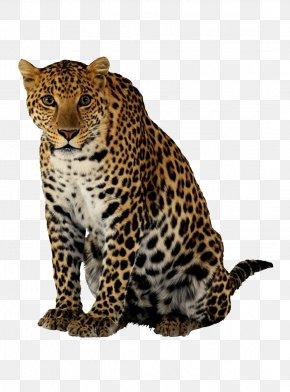 Cheetah Image - Leopard Cheetah Lion PNG