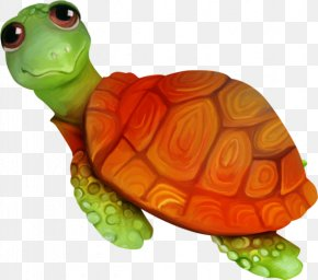 Cartoon Animals Crawl Small Turtle - Sea Turtle Tortoise Emydidae PNG