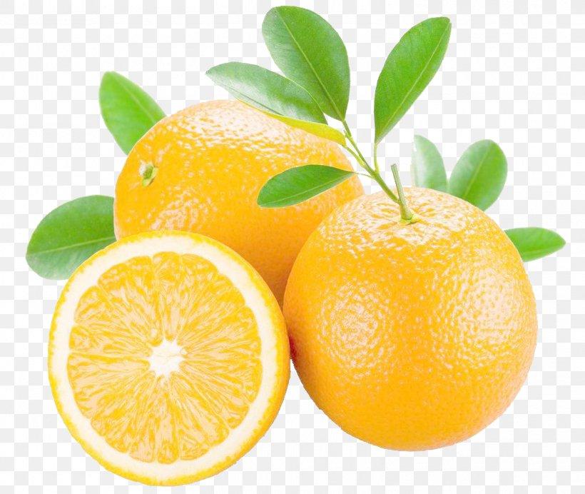 Orange Juice Mandarin Orange Grapefruit Bitter Orange, PNG, 1575x1330px, Orange Juice, Bitter Orange, Citric Acid, Citron, Citrus Download Free