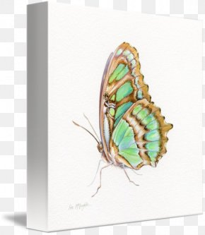 Glossy Butterflys - Nymphalidae Butterfly Gallery Wrap Canvas Art PNG