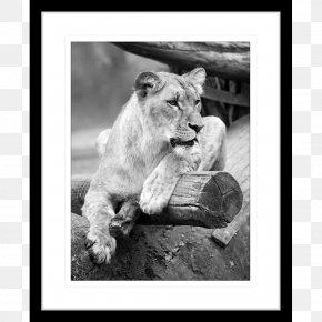 African Prints - Lion Cat Tiger Felidae Wildlife PNG