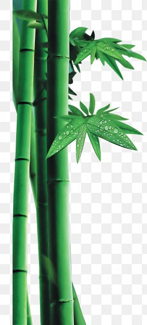 Green Bamboo Decorative Pattern - Bamboo PNG