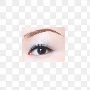 Eyebrow - Eyebrow Eyelash Extensions PNG